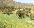 [Documentary] Iran-Trotter: Hawraman - English