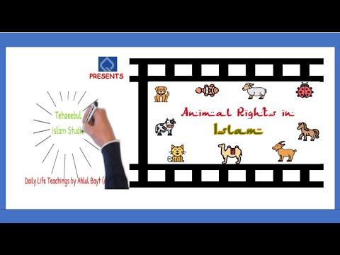 Animal rights in Islam | Islam & Animal Welfare | Whiteboard Animation | Must Watch | English