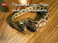 Snake with two heads stuns zoo - English