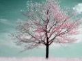 Poem: HUMBLE TREE by Yahya Naqvi - English