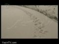 [P-2] روایت شیدایی - Narrative of Ishq - Documentary on Shaheed Aviny - Persian