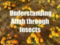 Firefly - Understanding Allah through Insects - English