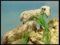 KIDS - Prophet Yunus (a.s) - ARABIC sub ENGLISH