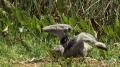 Bizarre Bird Attacks Baby Brother - English