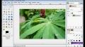 GIMP - How to enhance an image - English