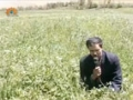 [16 Mar 2013] Natural weeds and Cure - قدرتی جڑی بوٹیاں اورعلاج - Urdu