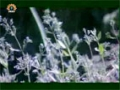 [19 Mar 2013] Natural weeds and Cure - قدرتی جڑی بوٹیاں اورعلاج - Urdu