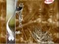 کلیپ ویژه غدیر خم همراه با تواشیح - Farsi