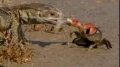 Predator Bay - Where even the greatest predators struggle for survival ( Documentary) english