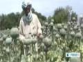 [29 May 2014] Afghanistan postpones poppy eradication campaign - English