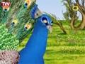 [10] کلاغ و طاووس - قصه ما مثل شد - Farsi