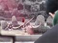 آرم لوگو شهادت امام جعفر صادق علیه السلام - Farsi