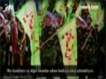 Müqavimət idealogiyası - Hizbullah - English Sub Azeri
