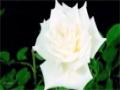 [02] The Masumeen (Poem Series) - Imam Ali (as) - Urdu